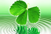 Strawberry leaves above the water — Stock Photo