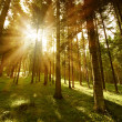 Forest sunny — Stock Photo
