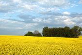 Colorful spring landscape — Stock Photo