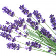 Lavender — Stock Photo #10655787