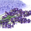 Lavender — Stock Photo #10655804