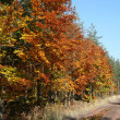 Forest road in autumn - Stock Photo