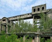 Abandoned plant — Stock Photo