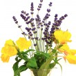 Primrose and lavender - Stock Photo