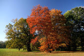 Autumn scenic — Stock Photo