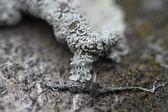 Coralli — Foto Stock