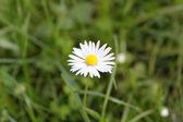 Bílý květ — Stock fotografie