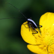 Bug at flower — Stock Photo