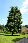 árvore grande — Fotografia Stock