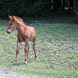 Foal little — Stock Photo