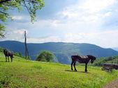 Horses on hill — Stock Photo
