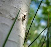 Ant climbing a tree — Stock Photo