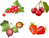 Berry set — Stock Vector