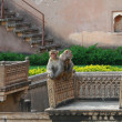Stock Photo: Apes at Bundi Palace