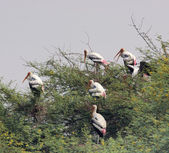 Treetop and storks — Stock Photo