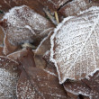 Frosted autumn foliage — Stock fotografie