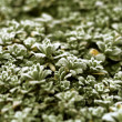 Frosty leaves — Stock Photo #9981782