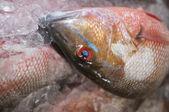 鱼头 — 图库照片
