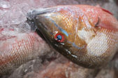 Cabeza de pescado — Foto de Stock