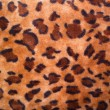 Texture of a leopard colouring — Stock Photo