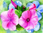 Watercolors, rose and blue flowerses — Stock Photo