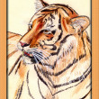 Watercolor painting of tiger — Stock Photo
