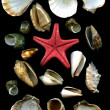 Secockleshells and starfish — Stock Photo #9470007