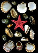 Estrella de mar y cockleshells mar — Foto de Stock