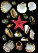 Sea cockleshells and starfish — Stock Photo