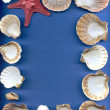 Sea bowls of a mollusk and starfish — Stock Photo