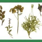Herbarium. — Stock Photo