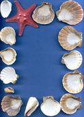 海碗软体动物和海星 — 图库照片