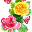 Watercolor a bouquet from roses — Stock Photo