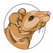Rat sign — Stock Photo