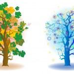 Cold seasons trees — Stock Photo