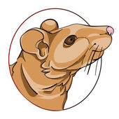 Rat sign — Stock Photo