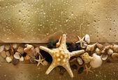 Seashells with starfish — Stock Photo
