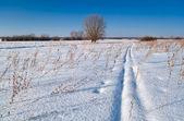Paisaje invernal del campo — Foto de Stock