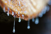 Drops of resin fall from a trunk in a pile of chopped wood — Stock Photo