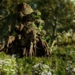 Druids Stump — Stock Photo #10421587
