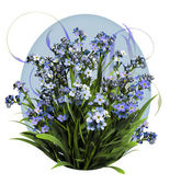 Blue Forget Me Not — Stock Photo