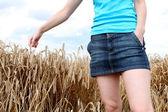Passa-se no campo de trigo — Foto Stock