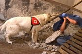 Search and Rescue dog — Stock Photo