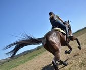Rider in jumping show — Стоковое фото