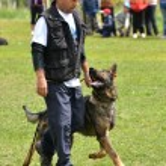 Dog at a dog training — Stock Photo