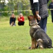 Dog at a dog training — Stock Photo