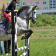 Show jumping — Stock Photo #10587301