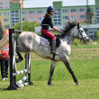 Stock Photo: Show jumping