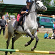 Show jumping — Stock Photo #10587374