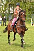 馬ジャンプ — ストック写真